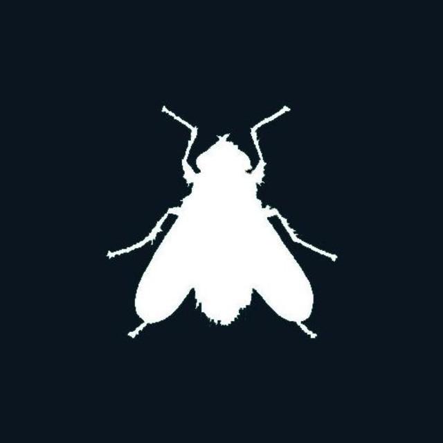 flies+flies